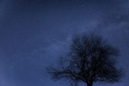 milky way galaxy: Milky Way galaxy image of night sky with natural silhouettes