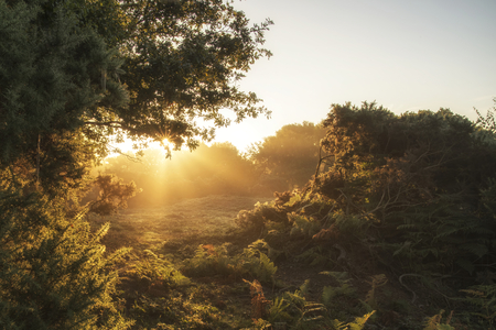 national forest: Stunning sunrise landscape in misty New Forest countryside Stock Photo