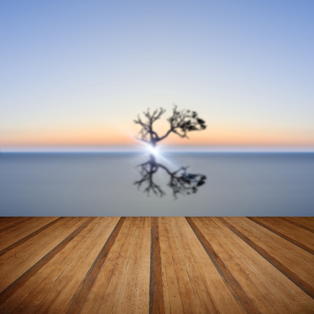 still water: Conceptual image of single tree in still water with wooden planks floor