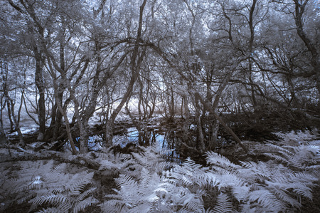 infrared: Surreal haunting infrared forest landscape with false color Stock Photo