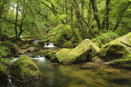 lush: Stunning landscape of river flowing through lush forest Golitha Falls in England