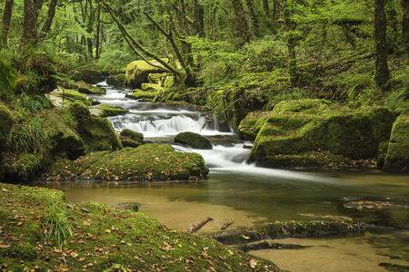 river rock: Landscape iamge of river flowing through lush green forest in Summer