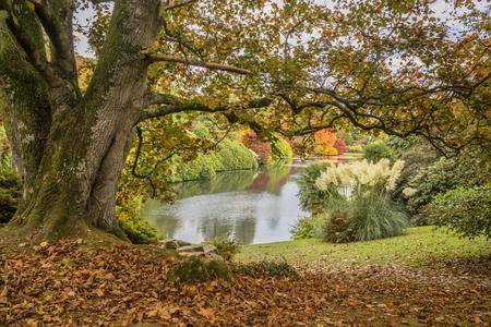 Prachtige levendige landschap van de herfst met uitzicht op meer Stockfoto