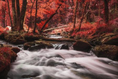 Stunning surreal alternate landscape of river flowing through forest