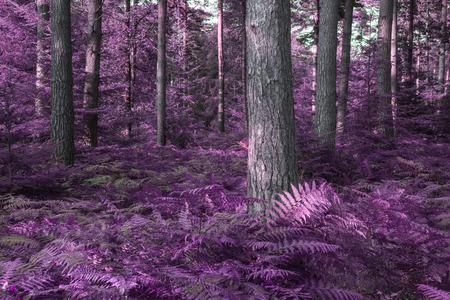 Stunning alternate colored surreal forest woodland landscape