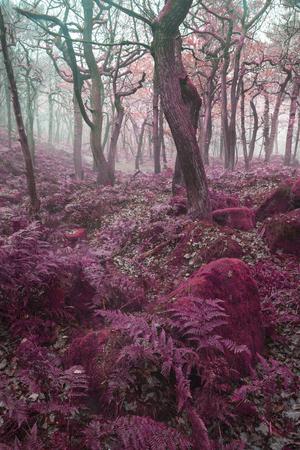 alternate: Stunning alternate colored surreal forest woodland landscape