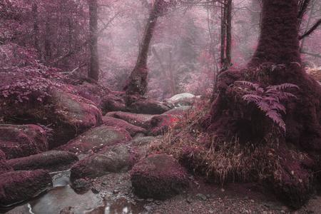 alternate: Beautiful surreal alternate color forest landscape image