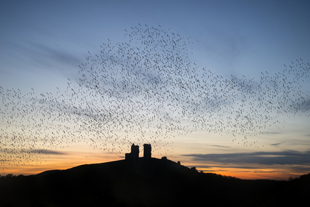 Murmuration d'étourneaux sur les ruines du château de conte de fées dans le paysage