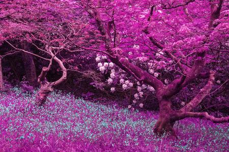 Stunning infra red landscape image of forest with alternative color