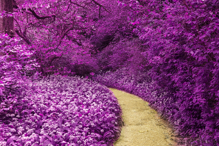 infra: Stunning infra red landscape image of forest with alternative color