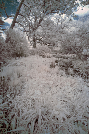 specialised: Stunning infra red landscape image of forest with alternative color