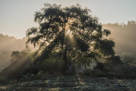 sunlgiht: Stunning sunrise landscape of sun beams shining through tree with golden glow all around