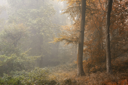 Seasons changing from Summer into Autumn Fall concept shown in one forest landscape image