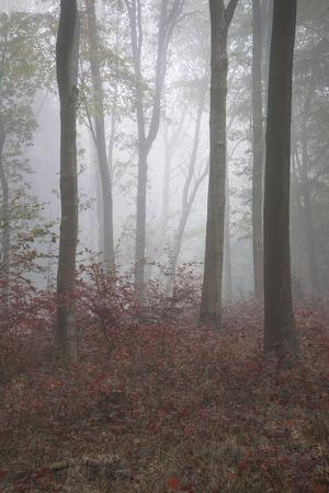 evocative: Stunning vibrant evocative Autumn Fall foggy forest landscape