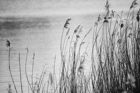 Minimalist black and white landscape image of reeds in Winter lake
