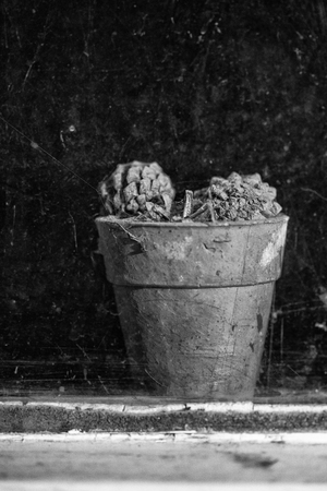 outbuilding: Old plant pot viewed through dirty window of derelict outbuilding