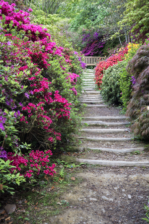 Beautiful landscape image of footpath border by Azalea flowers in Spring in England