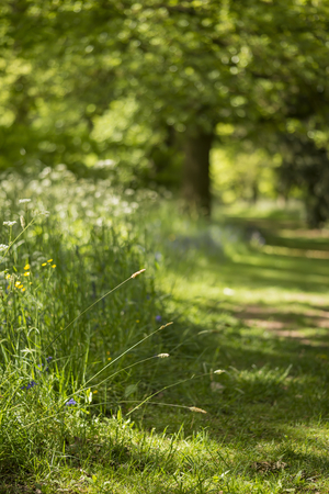 Beautiful shallow depth of field fresh landscape of English forest and countryside in Spring sunshine Stock Photo