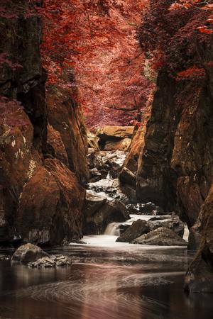 Beau paysage éthéré de gorges profondes avec des murs de roche et des cours d'eau qui traversent le feuillage rouge profond surréaliste