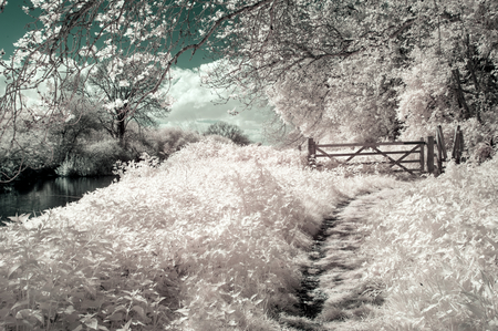 Surreal alternative colour infrared English countryside landscape