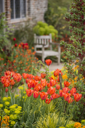 Beautiful shallow depth of field landscape image of English country garden borders with vibrant tulips and Spring flowers