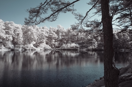 Beautiful unusual surreal infrared landscape image of lake and surrounding forest