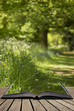 Beautiful shallow depth of field fresh landscape of English forest and countryside in Spring sunshine concept coming out of pages in open book