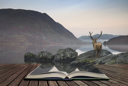 Beautiful red deer stag looks out across lake towards mountain landscape in Autumn scene concept coming out of pages in open book Stock Photo