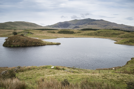Evening landscape image of Llyn y Dywarchen lake in Snowdonia National Park