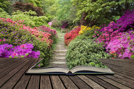 Beautiful landscape image of footpath border by Azalea flowers in Spring in England concept coming out of pages in open book