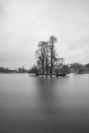 Black and white landscape image of tree on island in lake Фото со стока