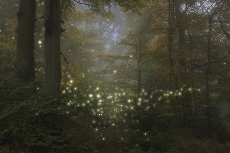 Stunning fantasy style landscape image of fireflies glowing in night time forest scene Reklamní fotografie