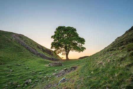 Stunning landscape image of Sycamore Gap at Hadrian's Wall in Northumberland at sunset with fantastic late Spring light 免版税图像