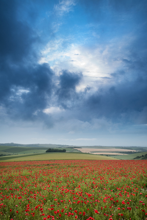 Beautiful landscape image of poppy field at sunrise in South Downs National Park