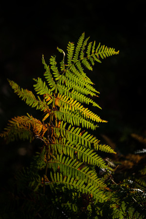 Beautiful intimate landscape detail image of fern in forest lit by sun against black background