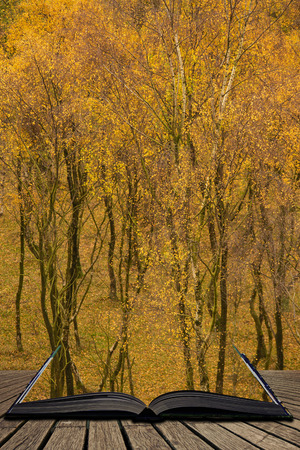 Stunning view of Silver Birch forest with golden leaves in Autumn Fall landscape scene of Upper Padley gorge in Peak District in England coming out of pages in magical story book 写真素材