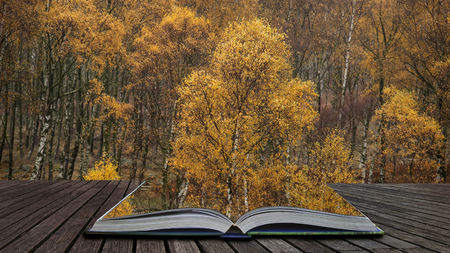 Beautiful vibrant Autumn Fall landscape in foggy Peak District in England coming out of pages in magical story book 写真素材