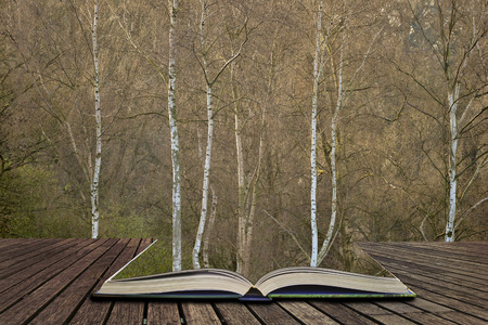 Beautiful Autumn Fall Winter forest woodland landscape scene in pages of open book, story telling concept