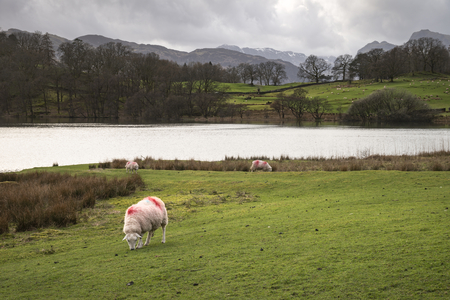 Beautiful landscape image of Loughrigg Tarn in UK Lake District during moody evening in Spring