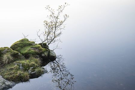 Beautiful intimate landscape image during Autumn Fall of small tree growing against still lake in background Banco de Imagens
