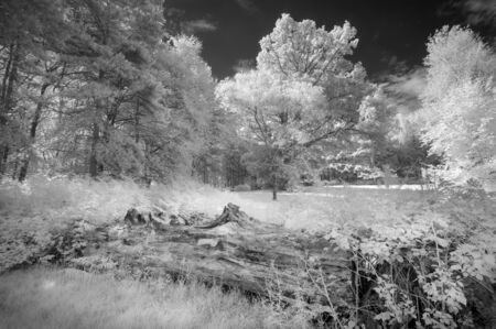 Beautiful infra red landscape image of forest in English countryside in Summer with false color processing Archivio Fotografico