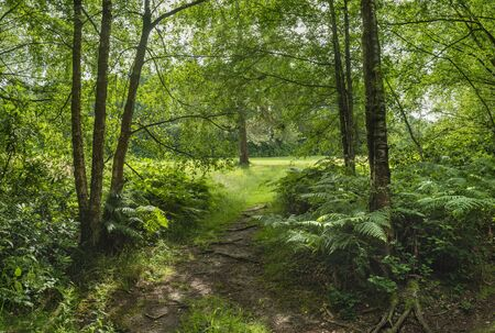 Beautiful Summer landscape image of lush green forest trees and foliage in English countryside
