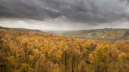 Stunning view over the top of Silver Birch forest with golden leaves in Autumn Fall landscape scene of Upper Padley gorge in Peak District in England