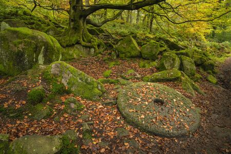 Beautiful vibrant Autumn forest landscape image of millstone in forest in Peak District