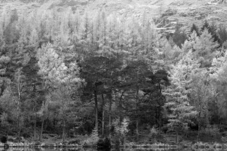 Beautiful black and white Autumn Fall landscape image of Blea Tarn with golden colors reflected in lake Standard-Bild