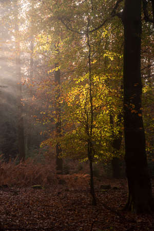 Stunning Autumn Fall forest landscape image with vibrant colors and stunning morning light