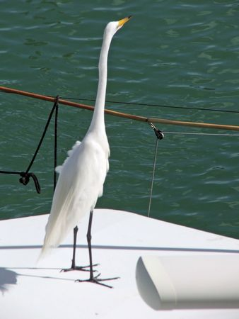 White heron stand on a boat