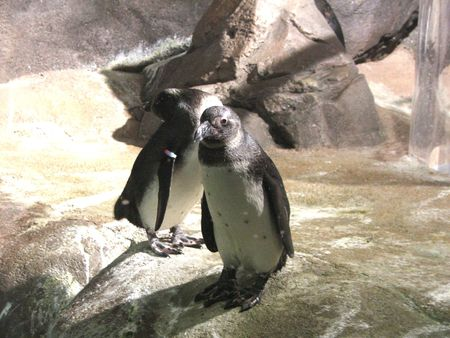 Pinguins on Georgia Aquarium, Georgia