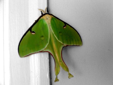 specie: A rare specie of butterfly Stock Photo