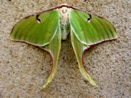 specie: A rare specie of a butterfly